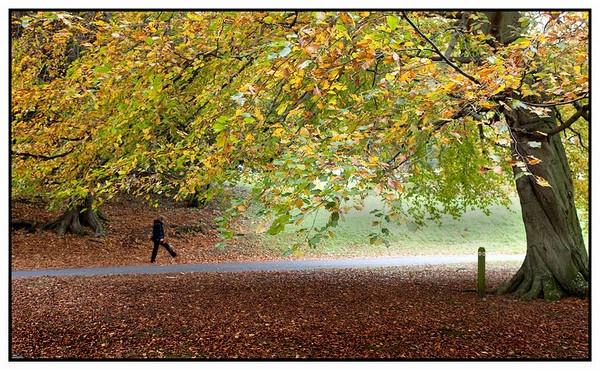Autumn by john short