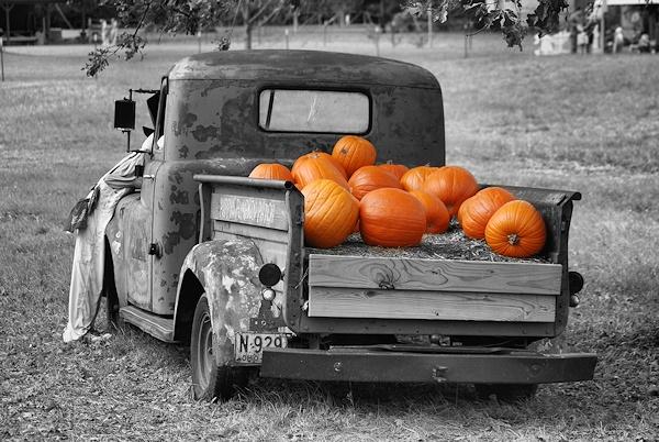 Pumpkin pickn\' by johnnyscirocco