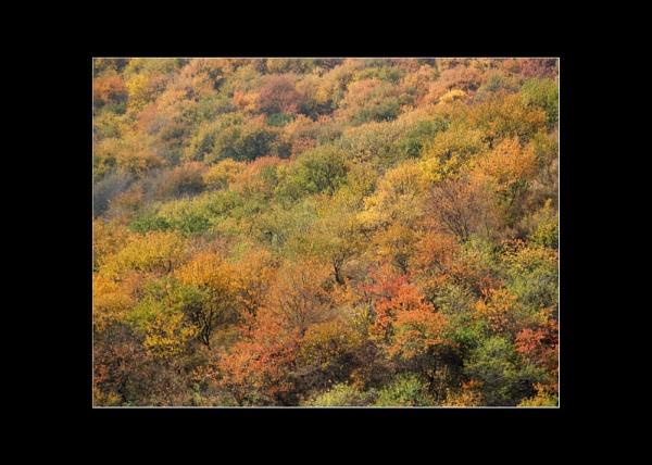 Autumn in Almaty by JdeNLucas