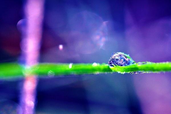 Purple Sensation by Haley