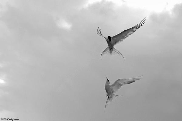 Aerial Comabt by CraigJones