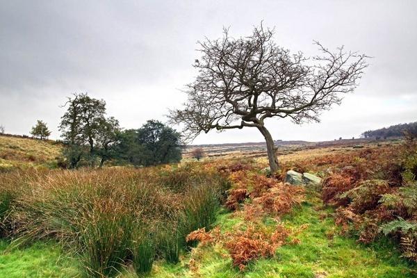 Autumn landscape by RTR