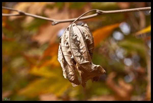 Fist Of Autumn by R3za
