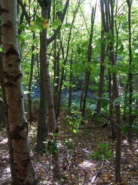 (wistful) Woods by Smurfmuffin