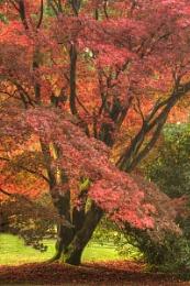Autumn Colour at Sheffield Park