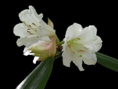Flowers by darranl
