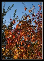 Autumn Leaves & Berries