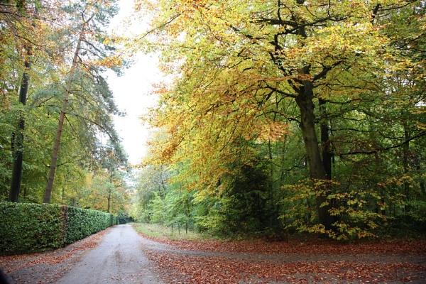 Autumn by Gaz111
