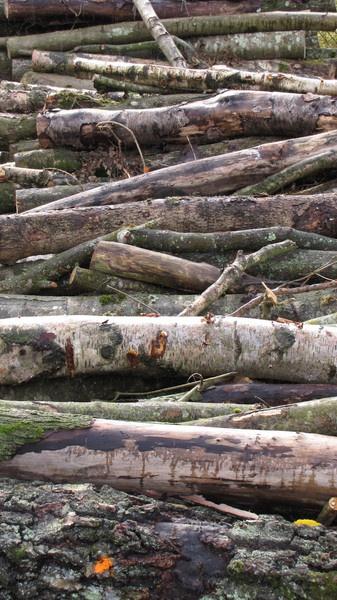 logs by sinbad4england