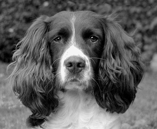 Davey the dog by pokey110