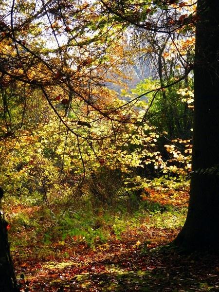 Thorp Perrow Arboretum by erichoulder