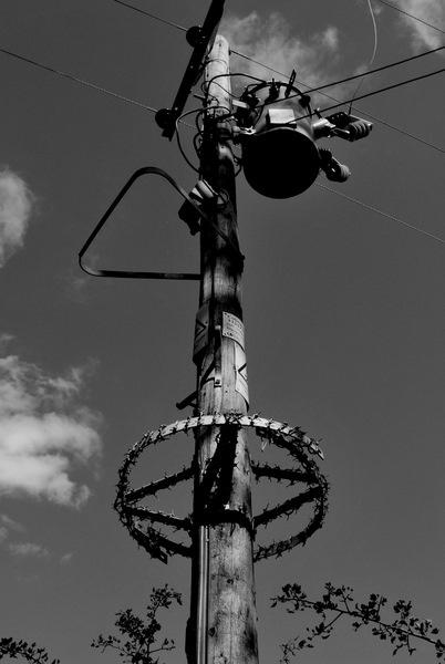 telegraph-pole. by staff_junior