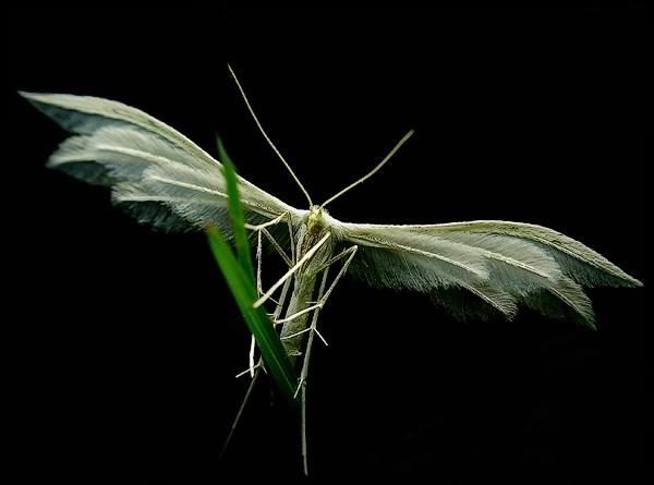 Angel by Benas