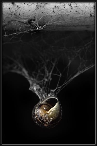 Snail Web by Morpyre