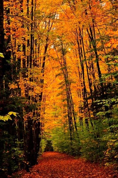 Golden Walk by JGCurry