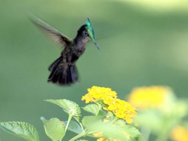 Humming bird by welshjohn