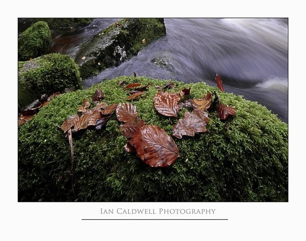 Autumn Rush by IanCaldwell