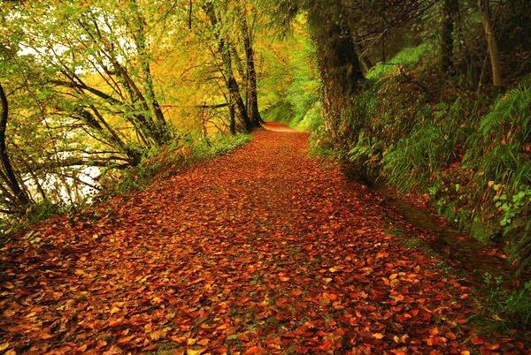falling leaves by mistysad