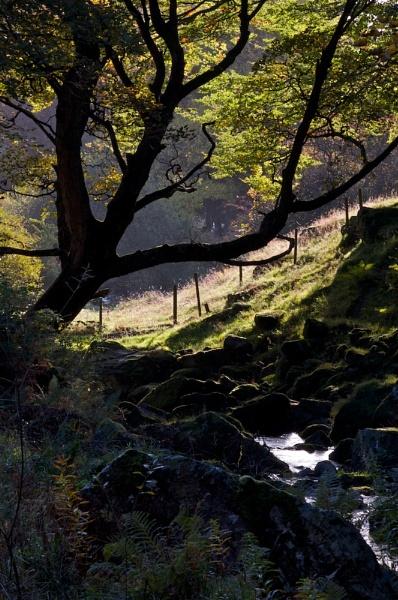 Downstream... by alansdottir