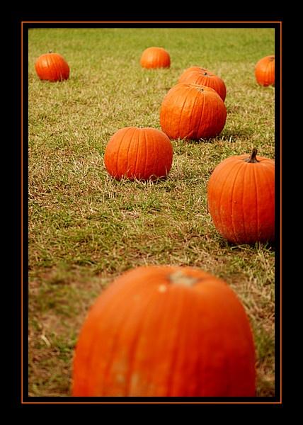 Pumpkins by johnnyscirocco