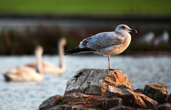 Sea Gull taking the sun by marathonman