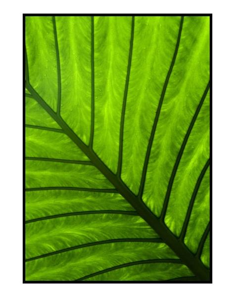 leaf by mah01