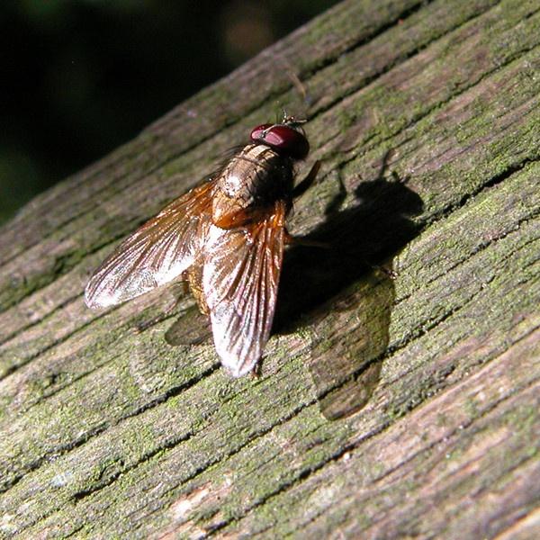 Sunbathing fly by eSnapper