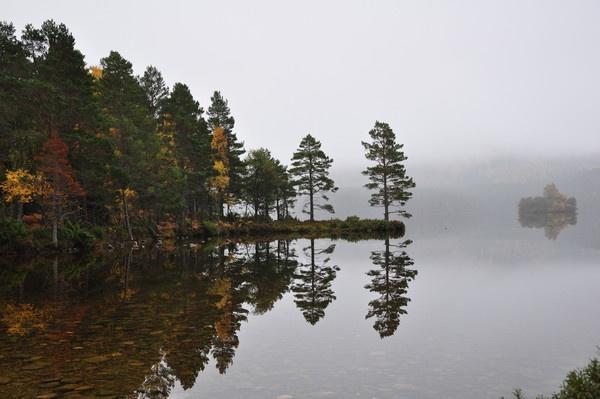 misty lochside by mcginty