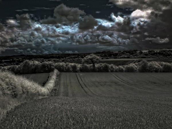 land by davidreece