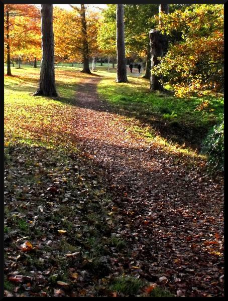 Autumn Walk by darranl