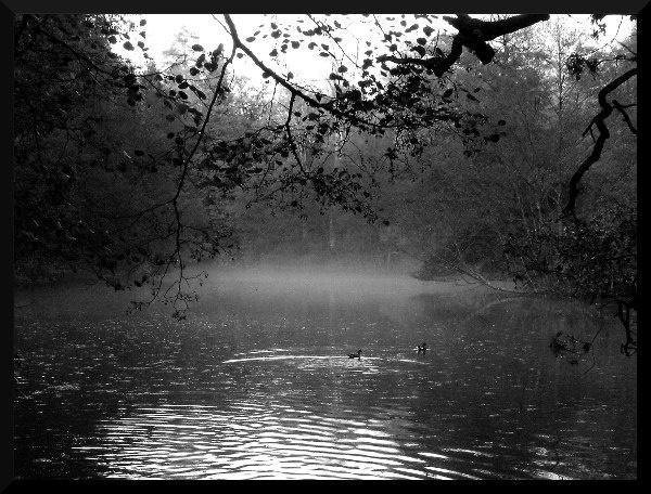 Lake at Wakehurst Place by darranl
