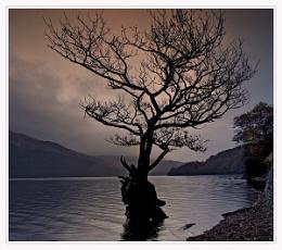 a tree at firkin point