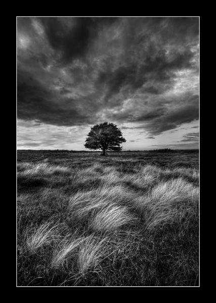 Lonesome Tree 3 by iansnowdon
