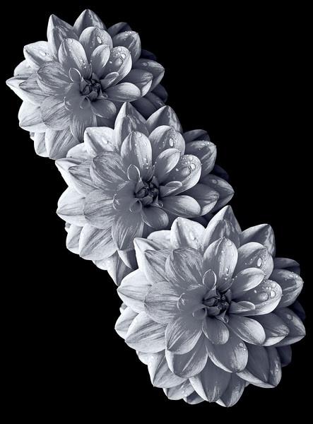 BLACK N WHITE by GERRYGENTRY
