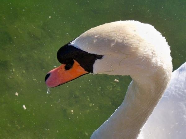 Swan\'s Beak by mrpjspencer