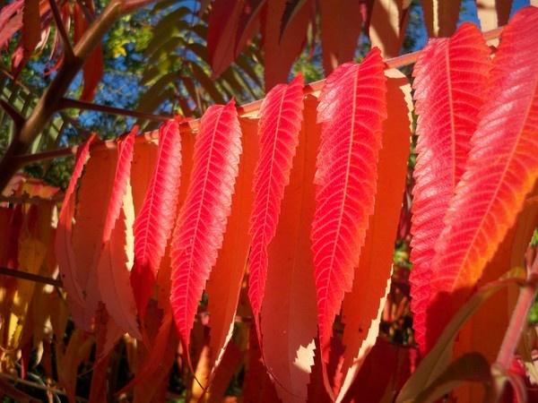 Autumn Leaves by mrpjspencer