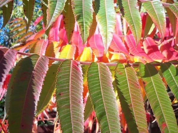 Autumn Leaves 2 by mrpjspencer