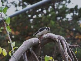 Mid Peck
