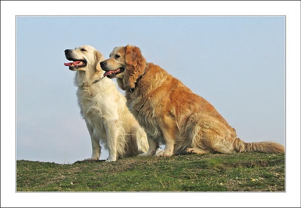 Golden Duo by conrad