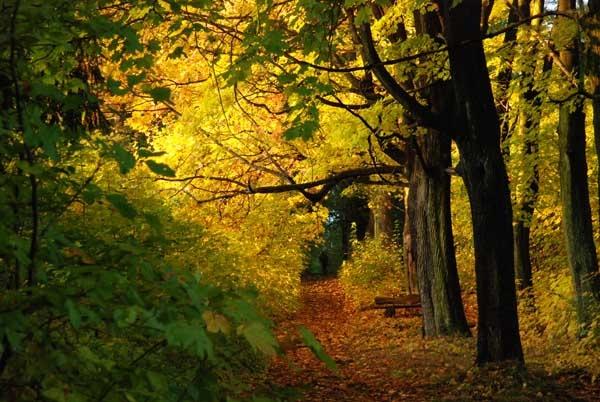 autumn trees by sepulturek