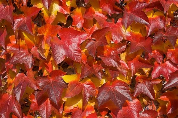 Autumn colors by JasperD
