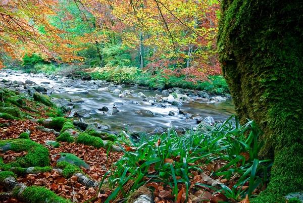 Autumn in Navarra by davidsaenzchan