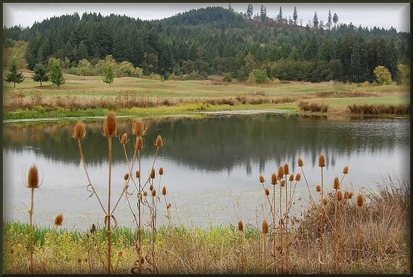pond on golf course by CherryMartin