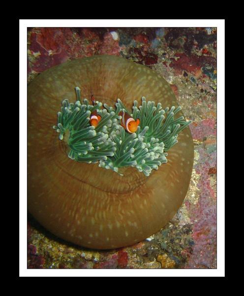 Found Nemo, Mindoro, Philippines by Skier
