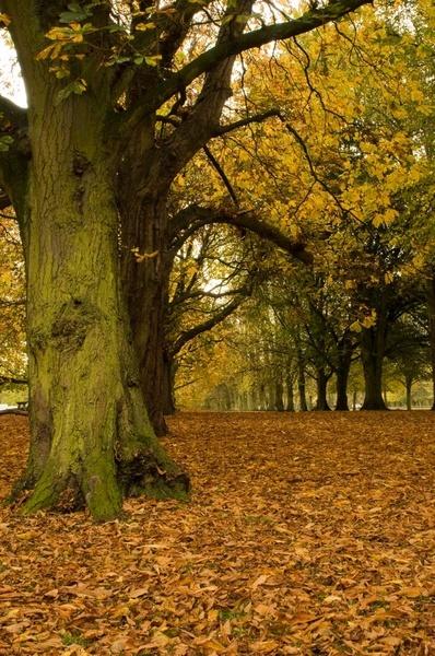 autumn row by ceejay63