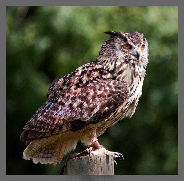 Owl by marathonman