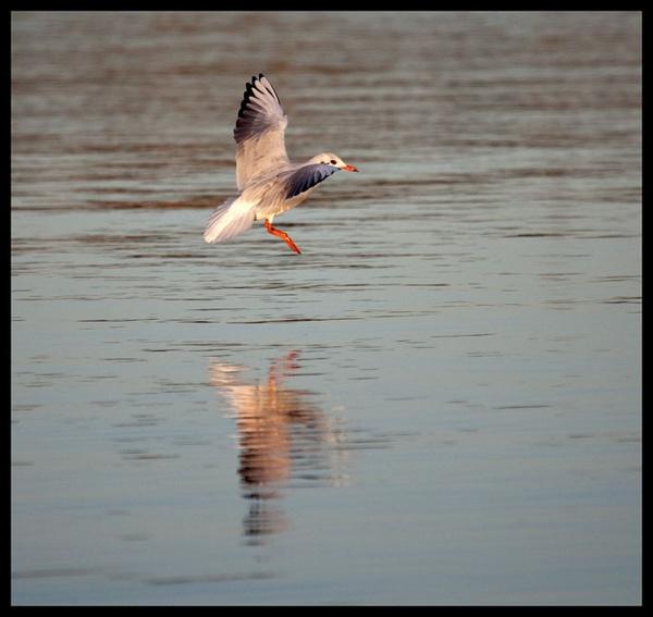 Landing on the River Orwell by marathonman