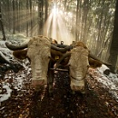 woodcutter's oxen