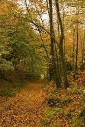Exmoor Lane: Autumn