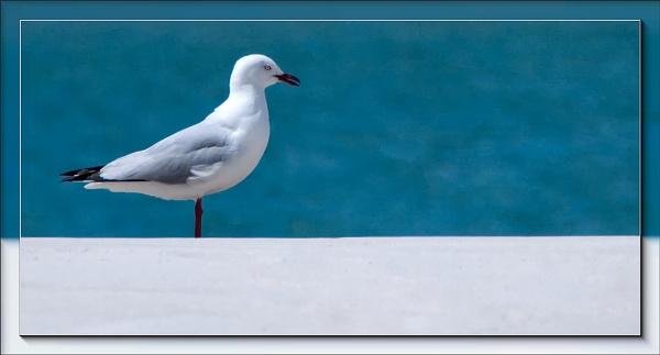Solo Seagull by VonQ